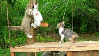 cika cats play with other cute cats