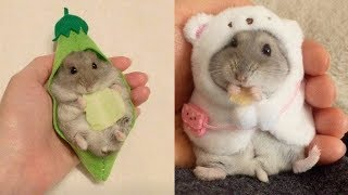 💗 Aww – Funny and Cute Hamster Compilation 2020 🐭#2 – CuteVN Animal