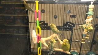 Cute birds @ The Pet Store!!