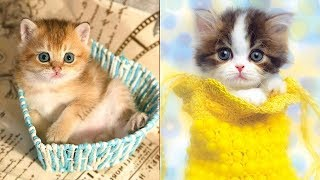 😍 Cute is Not Enough – Cute Kittens In The World #7 | CuteVN Animals