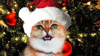 Funny Christmas Cats Sing Deck the Halls | Fa La La – Jingle Cats – Merry Christmas