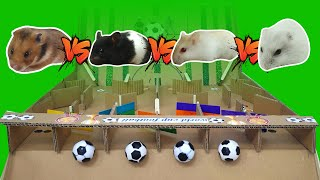 Funny Hamsters playing football !! Hamster Maze by Life Of Pets HamHam