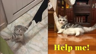 💗 Aww – These Cats Are Stuck 🤣 Funny and Cute Cats Compilation 2020 | CuteVN Animals