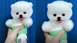 Tik Tok Puppies 🐶 Cute and Funny Dog Videos Compilation 2018