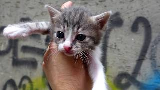 Five Baby Kittens Meowing l  Did You See Kittens Like This?