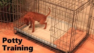 Potty Training Puppy Apartment – Official Full Video – How To Potty Train A Puppy Fast & Easy