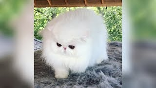 Happy Cats – Cute Cats Compilation