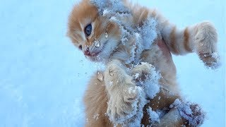 Rescue kitten freezing in the snow