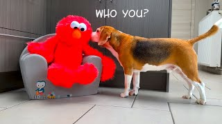 Dogs Vs ELMO | Elmo Song and Dance | Funny Dogs