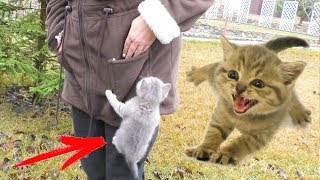 Where can a kitten Street climb? Funny cats moments compilation