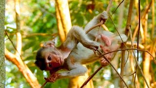 CUTE GIRL ALBA GROWN UP AND SO STRONG, ALBA IS FREEDOM TO PLAY ON THE TREE