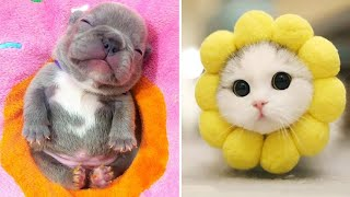 Baby Animals 🔴 Funny Cats and Dogs Videos Compilation (2020) Perros y Gatos Recopilación #16