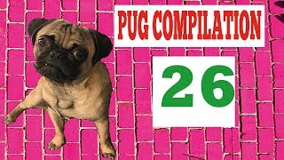Pug Compilation 26 – Funny Dogs but only Pug Videos | Instapugs