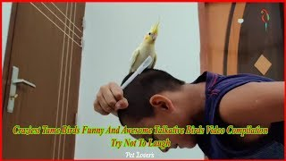 Craziest Tame Birds Funny And Awesome Talkative Birds Video Compilation | Try Not To Laugh