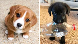 Cute baby animals Videos Compilation cutest moment of the animals – Cutest Puppies #2