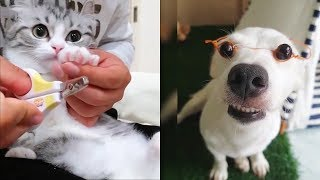Top Funny Animals 🔴 Cute And Funny Dogs Videos Compilation – Perros Graciosos Vídeo Recopilación