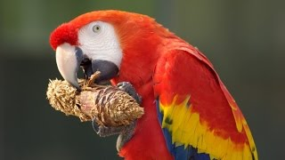 """Funny Birds Videos Of The World"" Funny Parrot & Bird Videos Weekly Compilation"