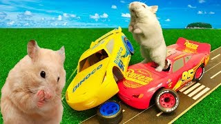 My Funny Hamsters Racers in Disney Cars Lightning McQueen and Hamster Cruz Ramirez – Crash Cars