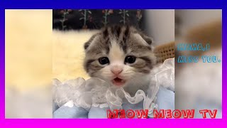 🐈Baby Cats ❤ Cute and Funny Cat Videos Compilation for cat person #19🐱Meow Meow TV