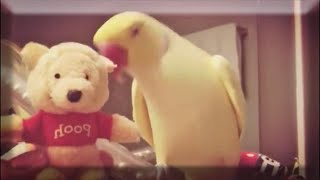 Birds Watching Funny Parrots And Cute Birds Compilation #BirdsParadise4