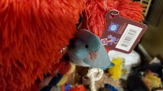This cute birdie don't want to sleep-funny bird playing