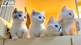 😍 Cute is Not Enough – Cute Kittens In The World #9 | CuteVN Animals