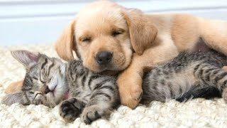 Funny Cats And Dogs Sleeping Together – A Cute Animals Videos Compilation 2015