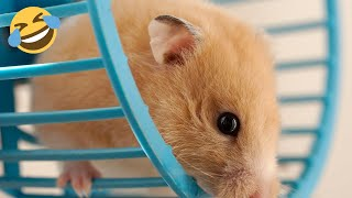 Funniest Hamsters in a Wheel Compilation | Pet Compilation 2020