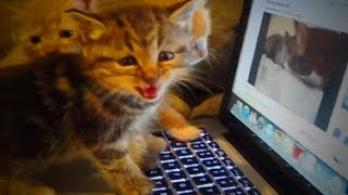 Funny Cats Talking 🐱🐶 Amazing Kittens And Cats Talking (Part 2) [Funny Pets]