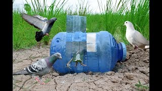 Awesome Quick Bird Trapping Using Plastic Bottle – How To Make Bird Trap With A Water Bottle
