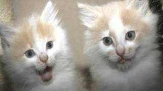 Very Funny Cats 42