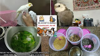 #BIRD CARE | COCKATIEL COMPLETE CARE GUIDE | TIPS AND TRICKS