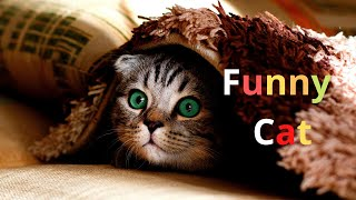 It's time for Super Laugh – Best FUNNY CAT video