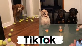 Dogs Doing Funny Things on TIK TOK – Try Not To Laugh – Cute Puppies – Best Compilation
