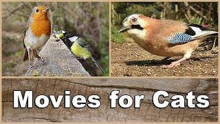 Movies for Cats to Watch Birds – The Ultimate Movie & Video for Your Cat