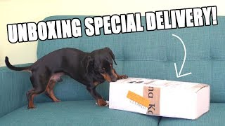 Crusoe Unboxing SPECIAL Delivery!! – Cute Dog Video Unboxing!