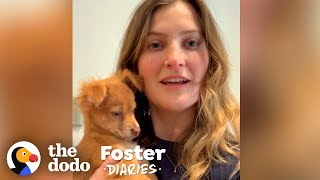 Puppy Has No Idea Her Foster Mom Is Stuck In Quarantine | The Dodo Foster Diaries