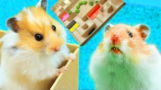 The hamsters in the maze! Collection of the best videos!