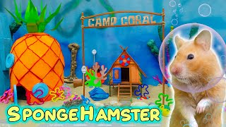 Syrian hamsters in Spongebob underwater world 🔵 Come and Enjoy – Homura Ham