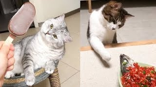 😍 Cat's Hilarious Reaction To Food 🐱 Funny and Cute Cats Compilation 2020 – CuteVN