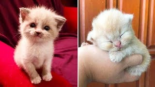😍 Cute is Not Enough 🤣 Funny Cats and Dogs Compilation 2020 #8 | Funky Pets