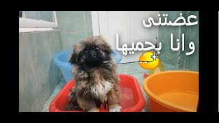 First Bath For my cute dog – Funniest & Cutest bikini dog
