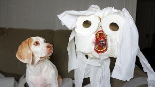 Dog vs Evil Toilet Paper Zombie Prank: Funny Dog Maymo