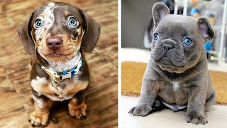 Cute baby animals Videos Compilation cutest moment of the animals – Cutest Puppies #4