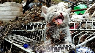 Kitten street trapped in a landfill