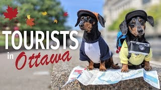 Ep #2: Crusoe & Oakley are TOURISTS in Ottawa! – (Cute & Funny Dog Travel Video)