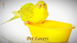 Naughty Parrots Doing Hilarious Fun – Craziest Birds Funniest Video