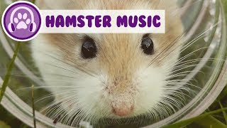 Music for hamsters! Chill out your hamster!