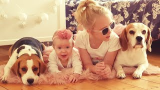 This is Why Beagle Dogs are Perfect Companions for Babies |  Cute Dogs And Babies