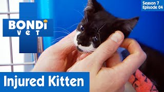 🐱 Small Kitten Is Injured | FULL EPISODE | S07E04 | Bondi Vet
